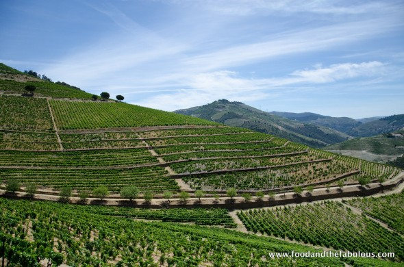 view of vines in douro valley