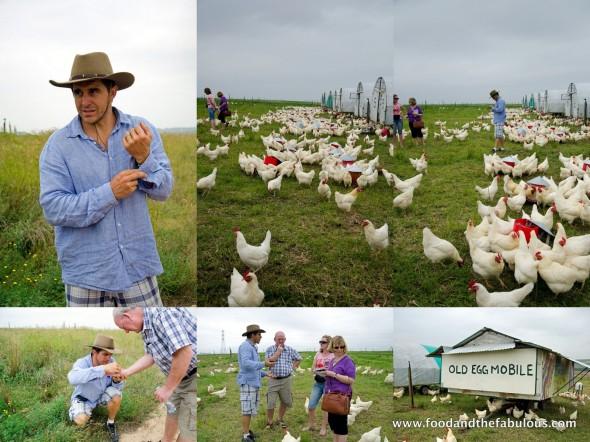 Farmer Angus and his chooks