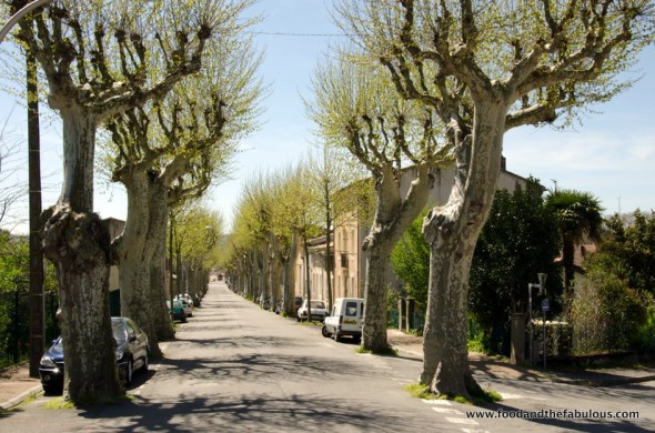 Castelnaudary trees