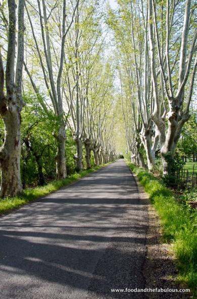 la petite route de Maillanne'