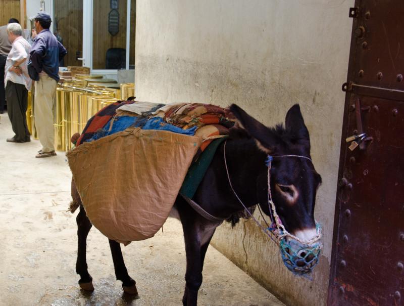 donkey, Fez