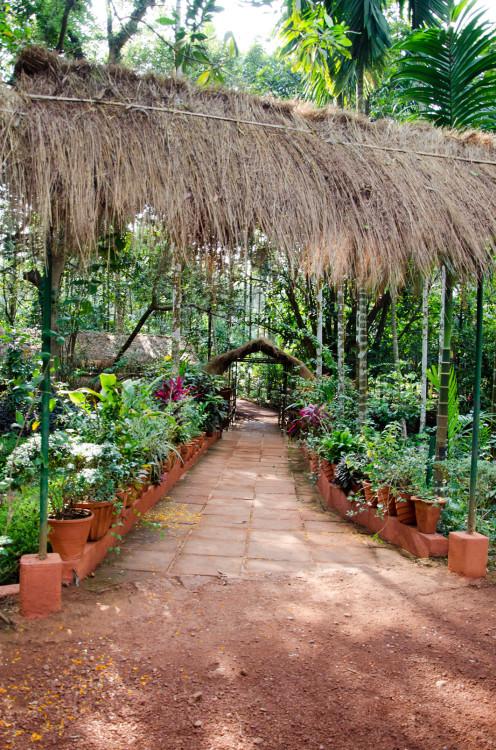 spice plantations, Goa