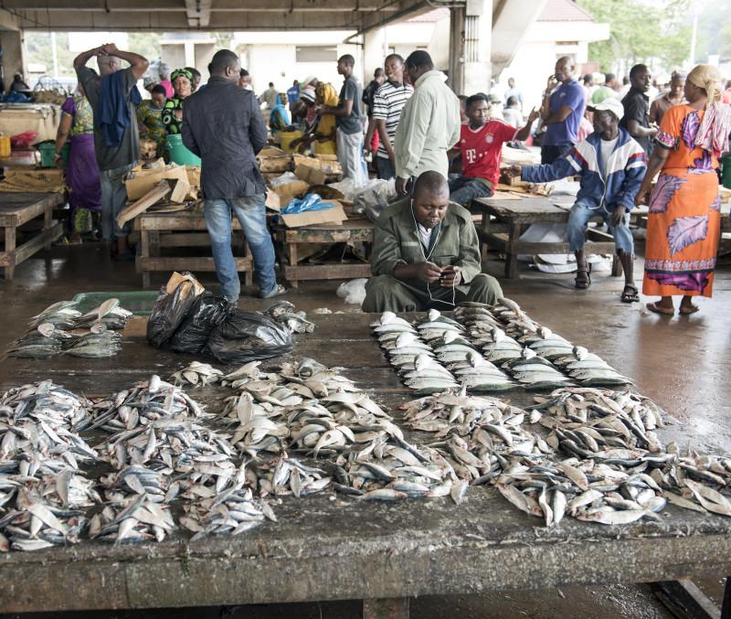 Fish Market Dar