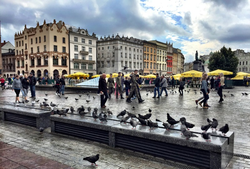 Pigeons at Krakow main square
