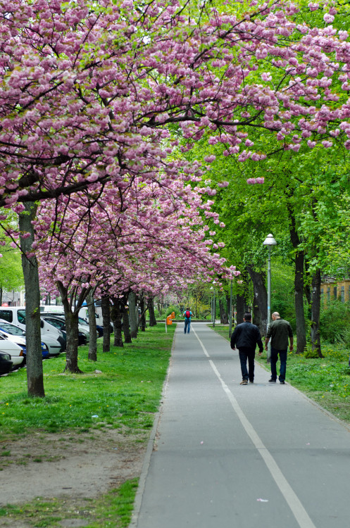 park Kreuzberg
