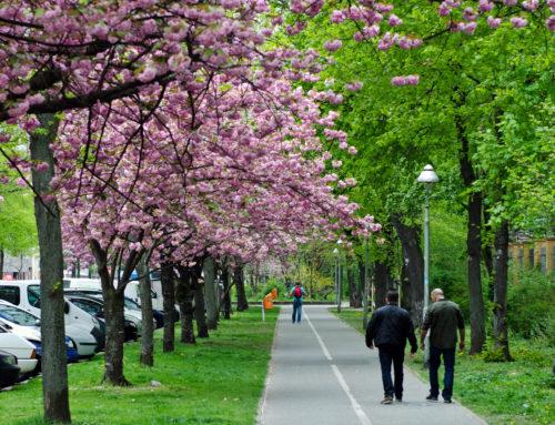 Berlin's Eco-Friendly Future