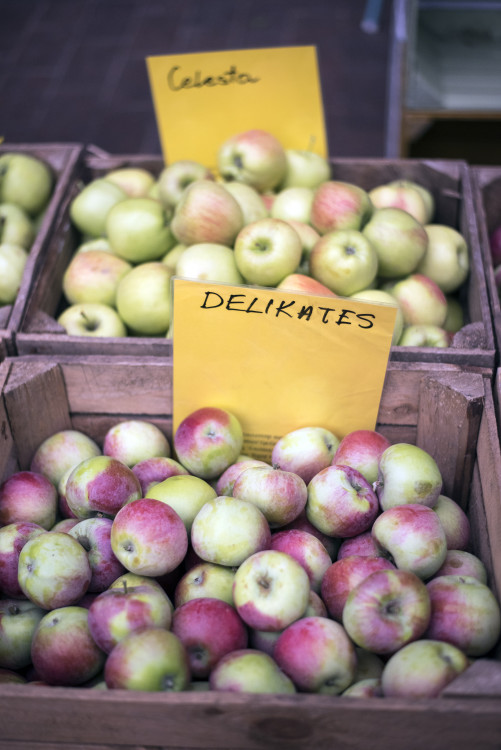 Apples from Poland are famous in Europe