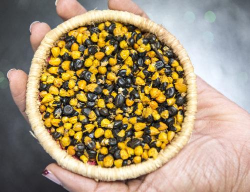 Aboriginal Cooks on Bush Tucker